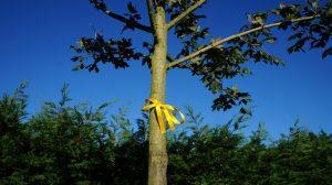 Missing People Memory Tree